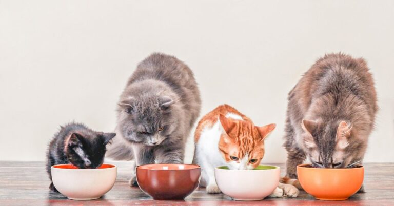 How Long Can Cats Go Without Food? (My Cat Isn't Eating)