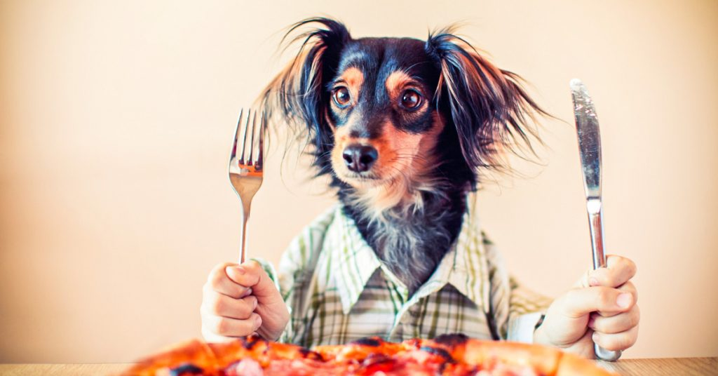 can dogs eat pizza