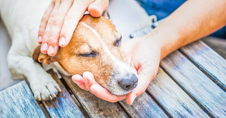 When to Euthanize a Dog with Cushing's Disease