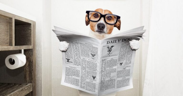 Dog Has Diarrhea But Acts Fine