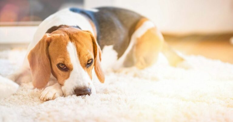 What is Elbow Hygroma in Dogs