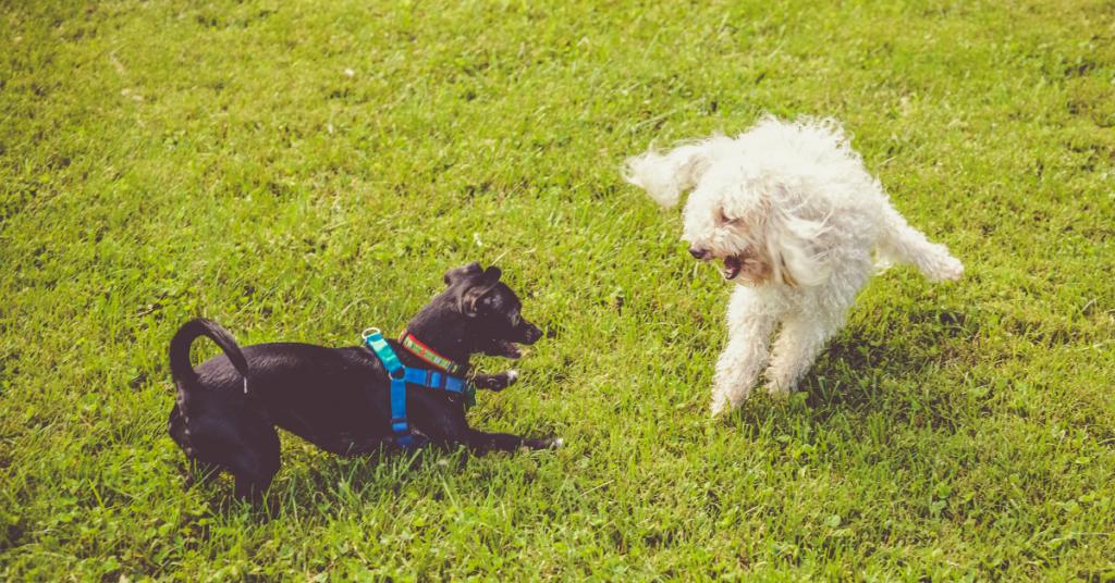 acid reflux in dogs
