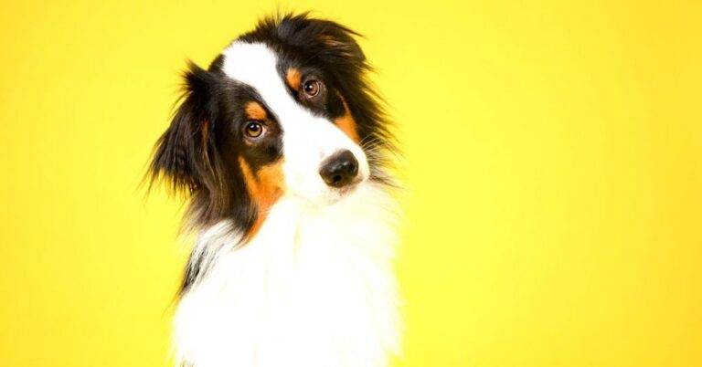 What is Acid Reflux in Dogs?