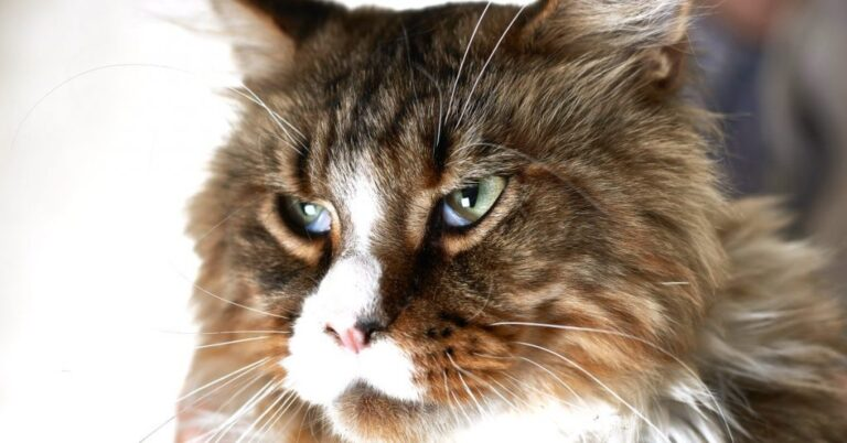 What is Coccidia in Cats?