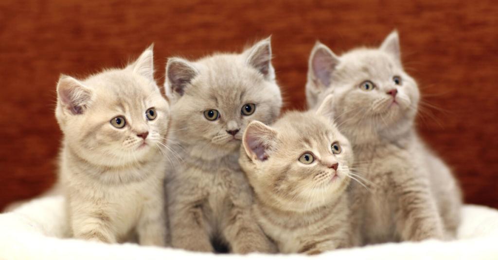 ringworm in kittens