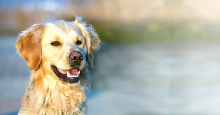 Degenerative Myelopathy in Dogs: What You Should Know