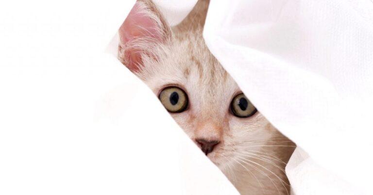 Can You Give Cats Benadryl?