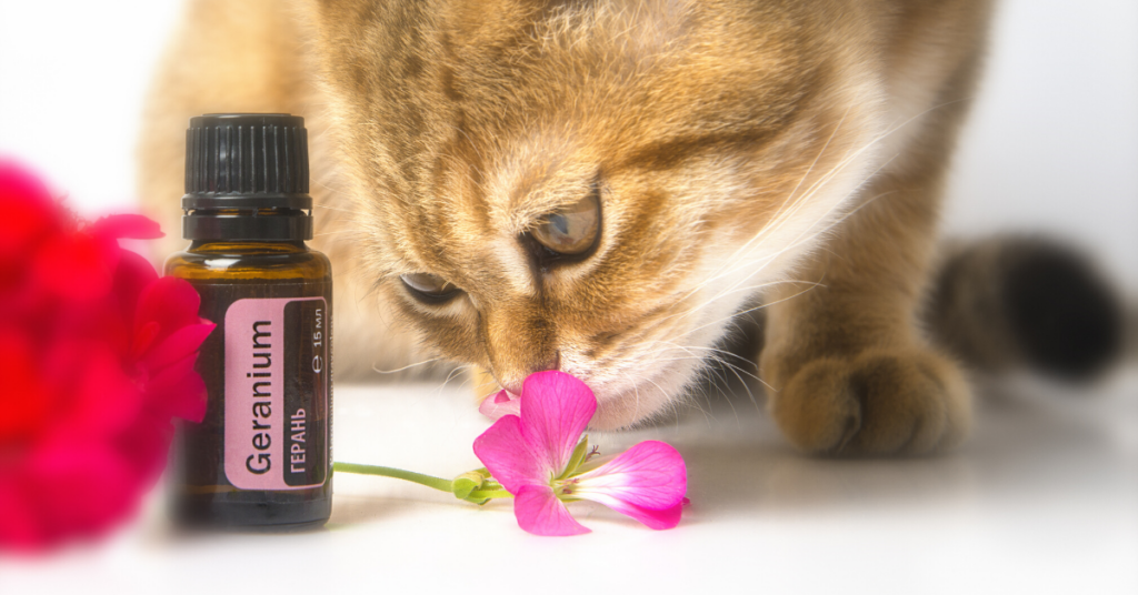 essential oils toxic to cats