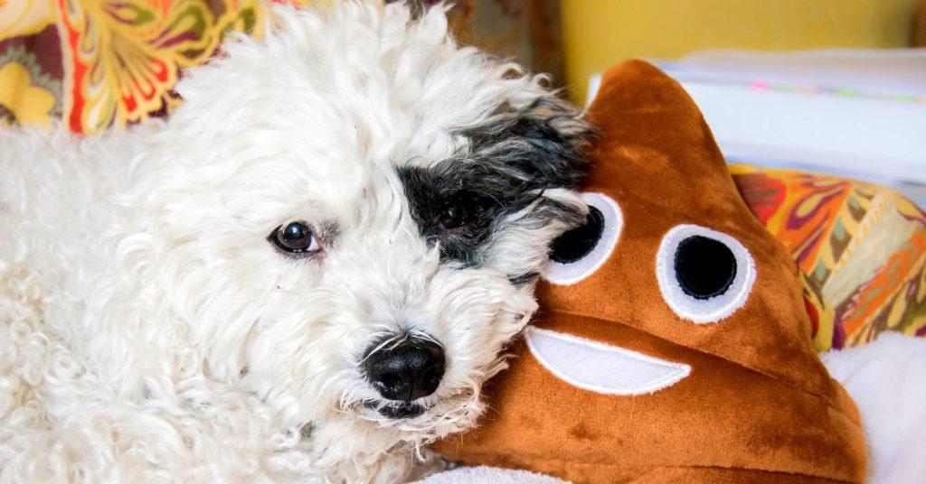 maggots in dog poop