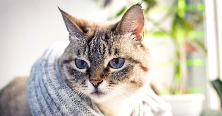 Anemia In Cats (Complete Guide)