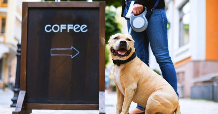 Can Dogs Drink Coffee? (Caffeine Toxicity)