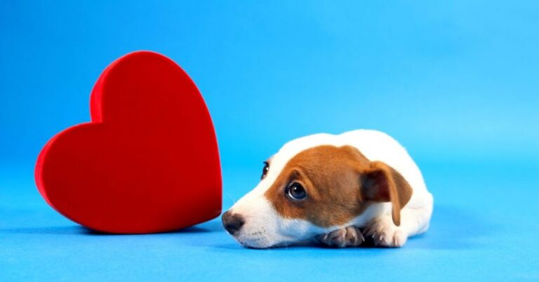 Signs Of Heart Failure In Dogs