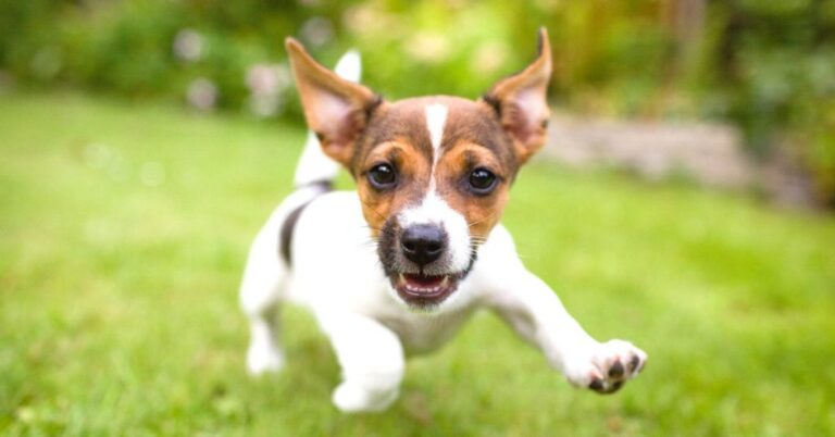 Parasites In Dogs You Should Know About
