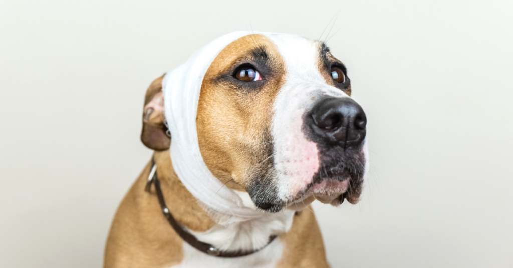 can dogs get concussions