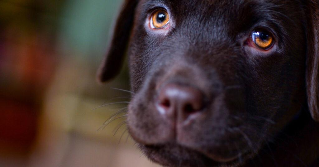 dog tumors