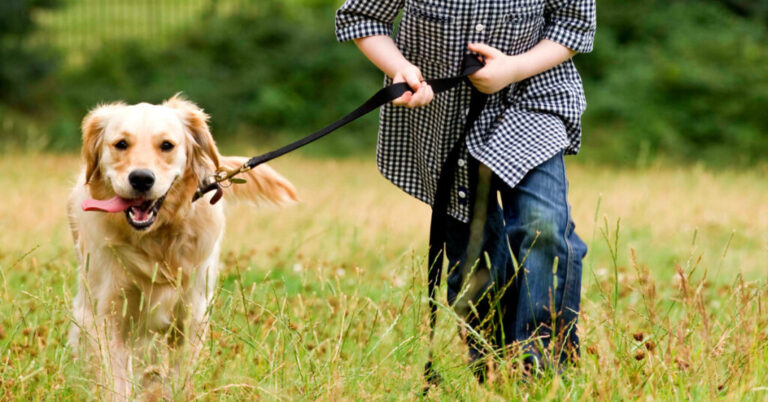 Signs of Hip Dysplasia in Dogs