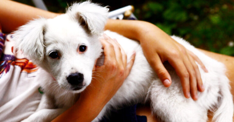 Treating Luxating Patella in Dogs