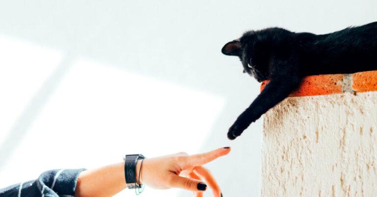 Symptoms of Lymphoma in Cats