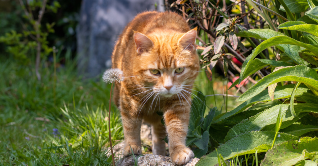 neosporin on cats