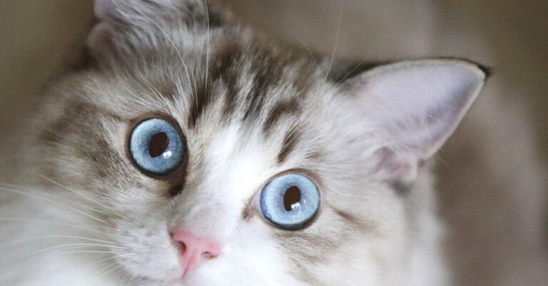 Neosporin On Cats: Is It Safe?