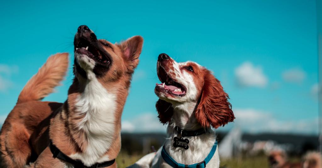 periodontal disease in dogs