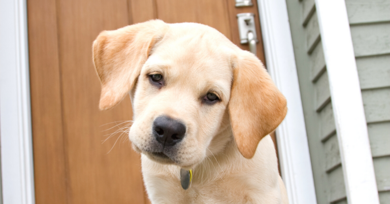 What is Ataxia in Dogs?