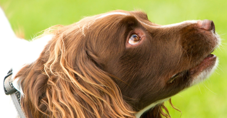 Why Do Dogs Have Seizures?