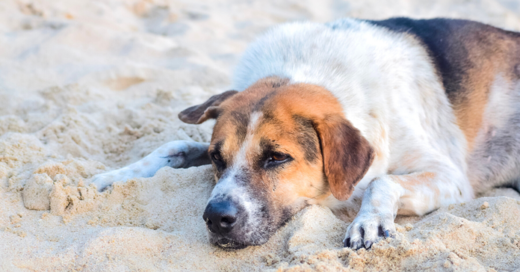 bronchitis in dogs
