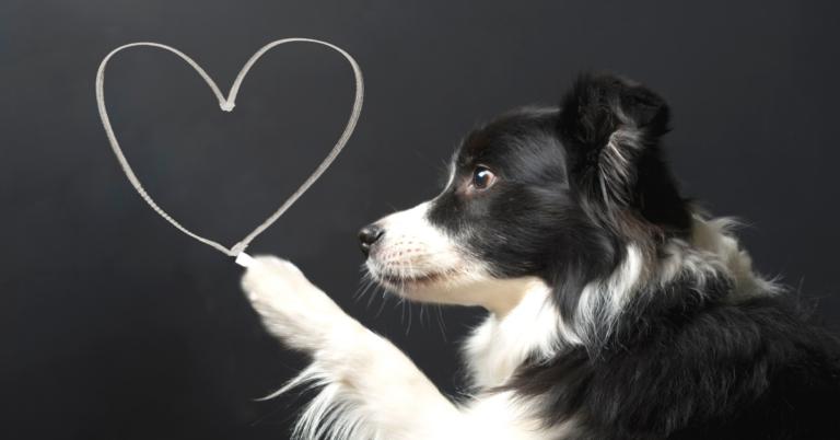 Symptoms of Heart Disease in Dogs