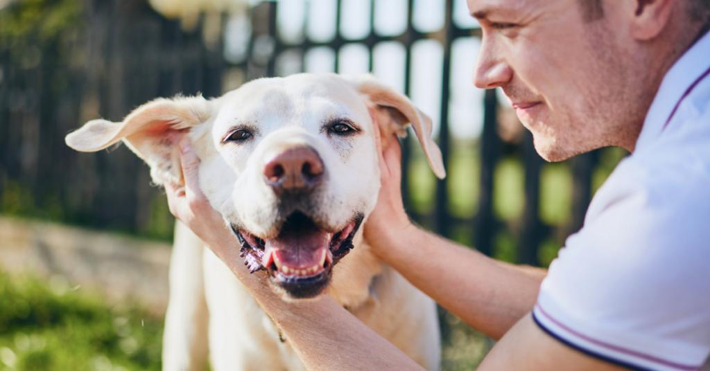 heart disease in dogs